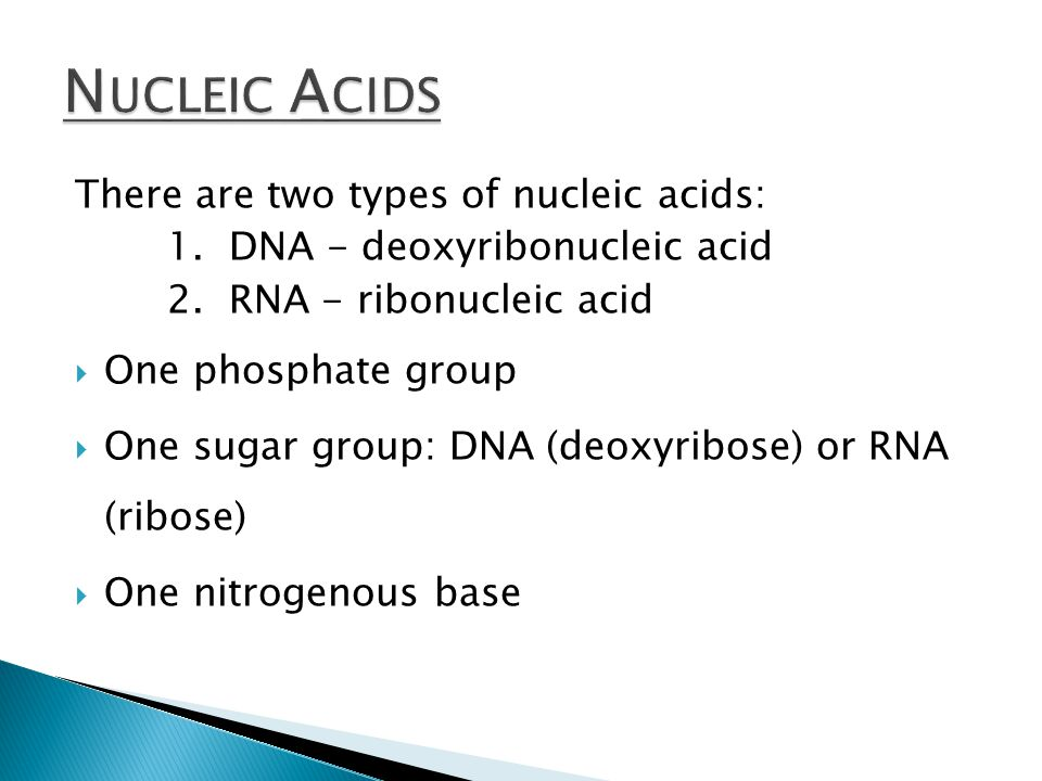 There are two types of nucleic acids: 1. DNA - deoxyribonucleic acid 2.