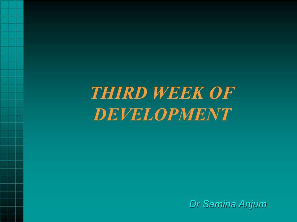 THIRD WEEK OF DEVELOPMENT Dr Samina Anjum