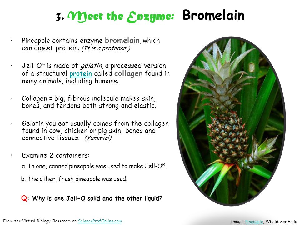 3. Meet the Enzyme: Bromelain Pineapple contains enzyme bromelain, which can digest protein.