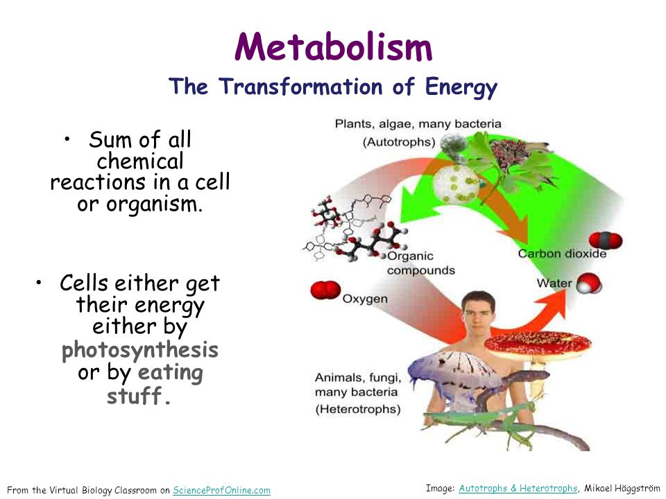 Metabolism The Transformation of Energy Sum of all chemical reactions in a cell or organism.
