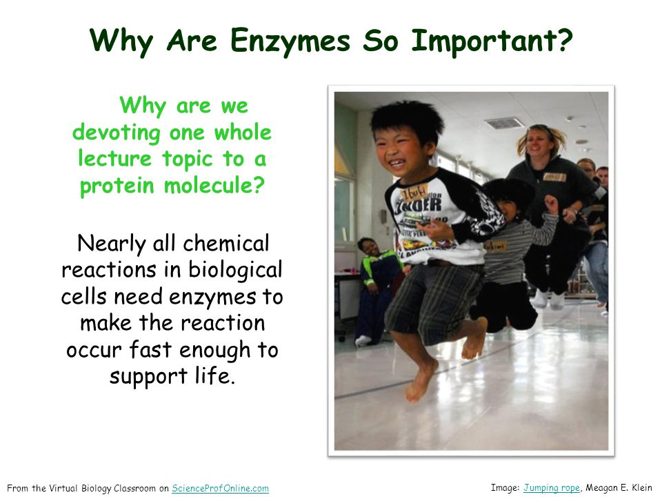 Why Are Enzymes So Important. Why are we devoting one whole lecture topic to a protein molecule.