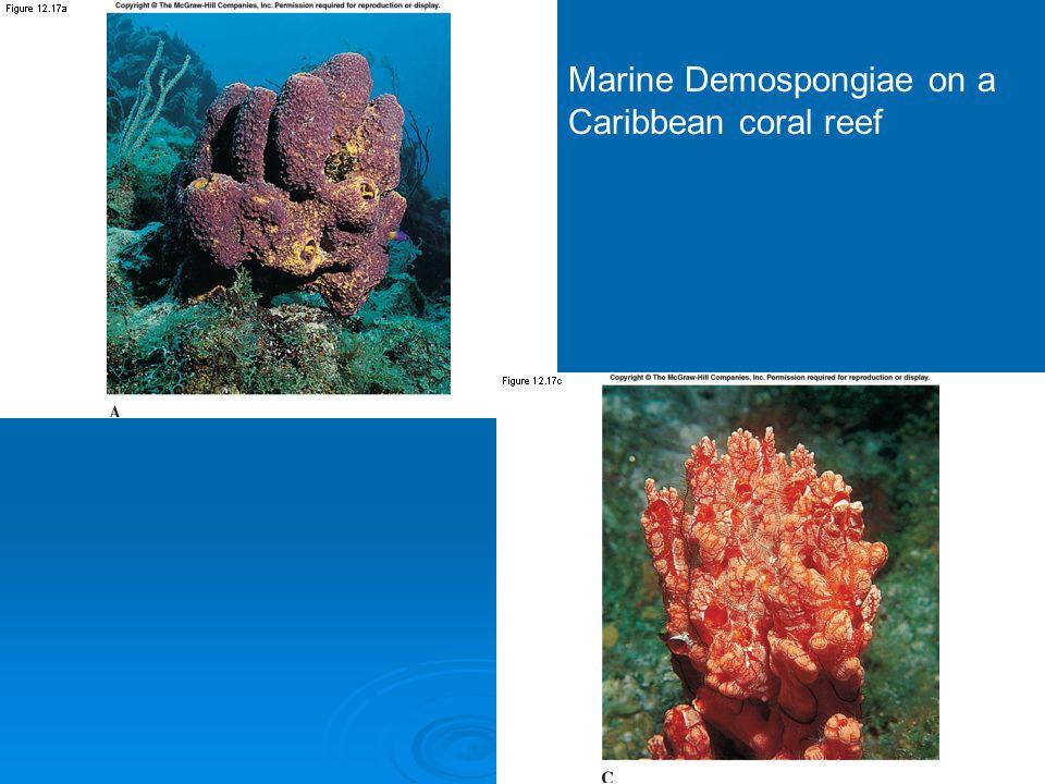 Marine Demospongiae on a Caribbean coral reef