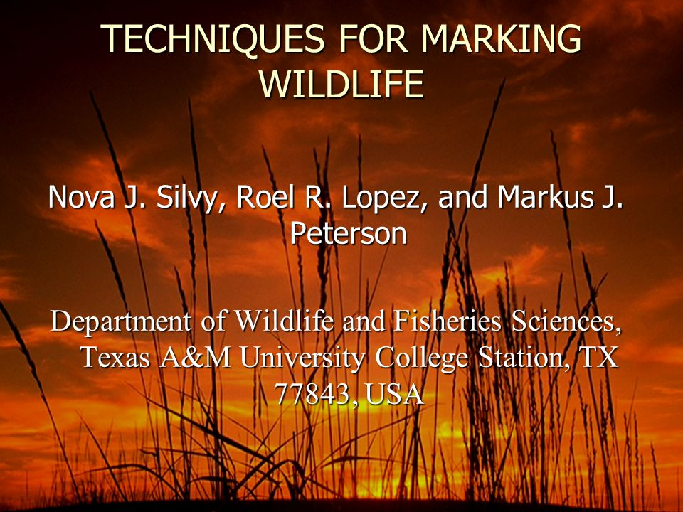 Invasive Marking Techniques ► ► Internal Markers ( chemical, particle, and radioactive ) ► ► Transponders ► ► Tattoos ► ► Tags ( ear, wing, body, jaw, and other appendages ) ► Branding ( hot, freeze, chemical, and laser ) ► Tissue Removal ( feather Imping and clipping; fur removal; shell notching; scale, toenail, and toe clipping; ear punching and notching; web punching; tail clipping; skin transplantation; and amputation)