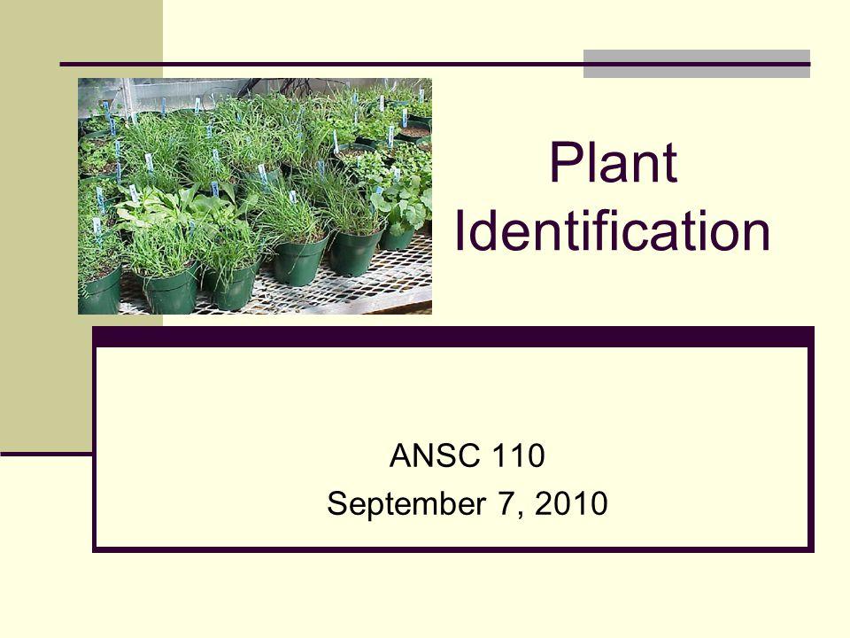 Plant Characteristics - Leaf growth Folded Rolled