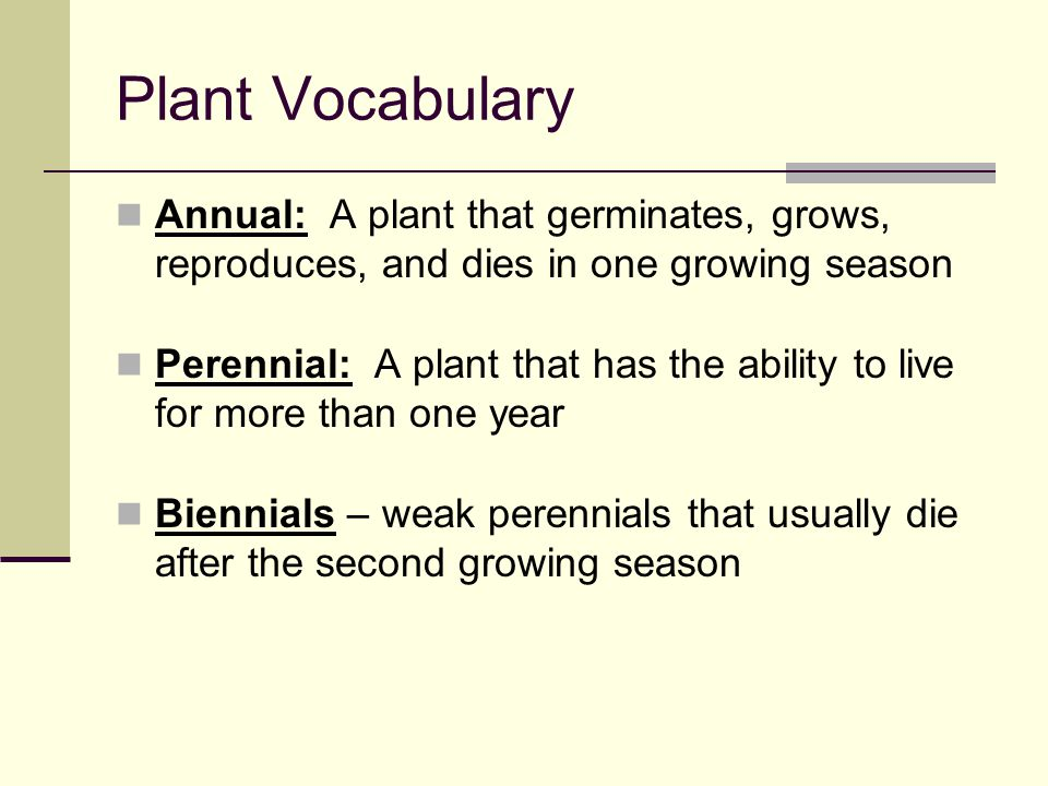 Plant Vocabulary Warm Season Plants: plants that begin growth and/or are planted in the spring or early summer and do most of their growth during the warmest part of the year Cool Season Plants: plants that begin growth and/or are planted in the fall or early spring and do most of their growth during the coolest months of the year (except during winter)
