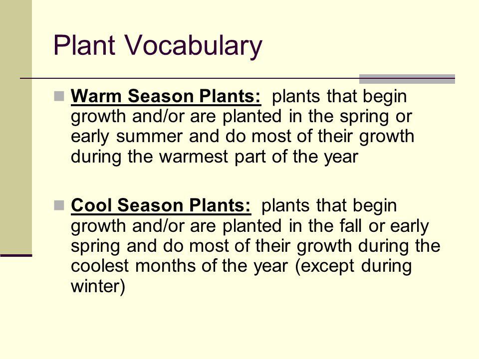 Legume Plant Parts