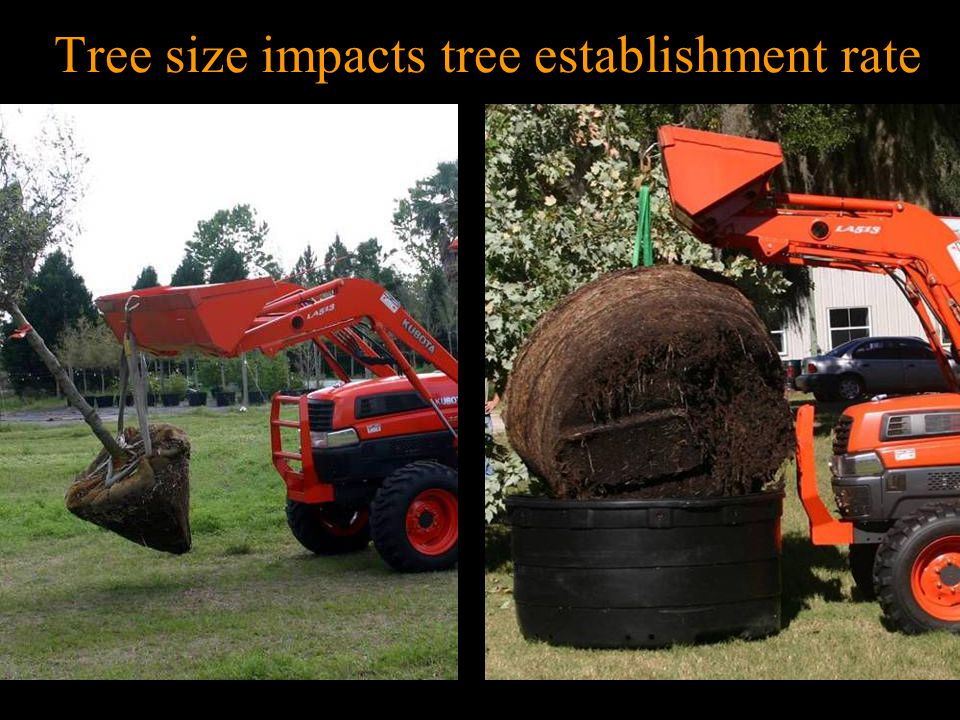 Tree size impacts tree establishment rate