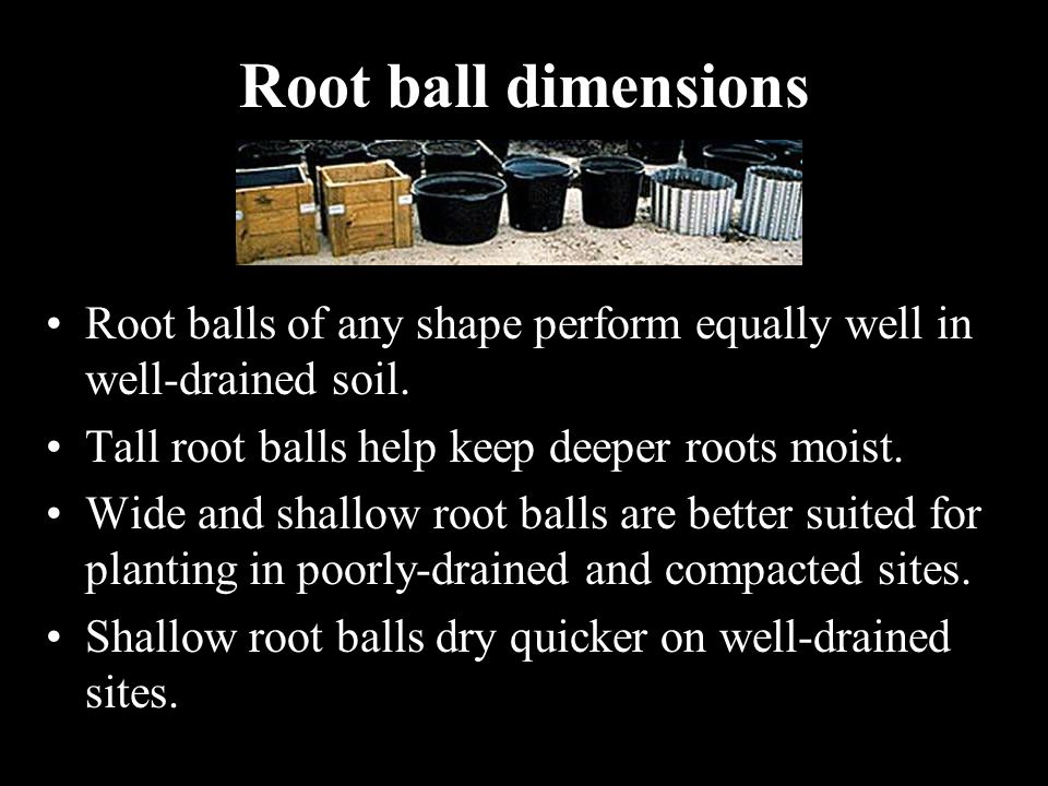 Root ball dimensions Root balls of any shape perform equally well in well-drained soil. Tall root balls help keep deeper roots moist. Wide and shallow