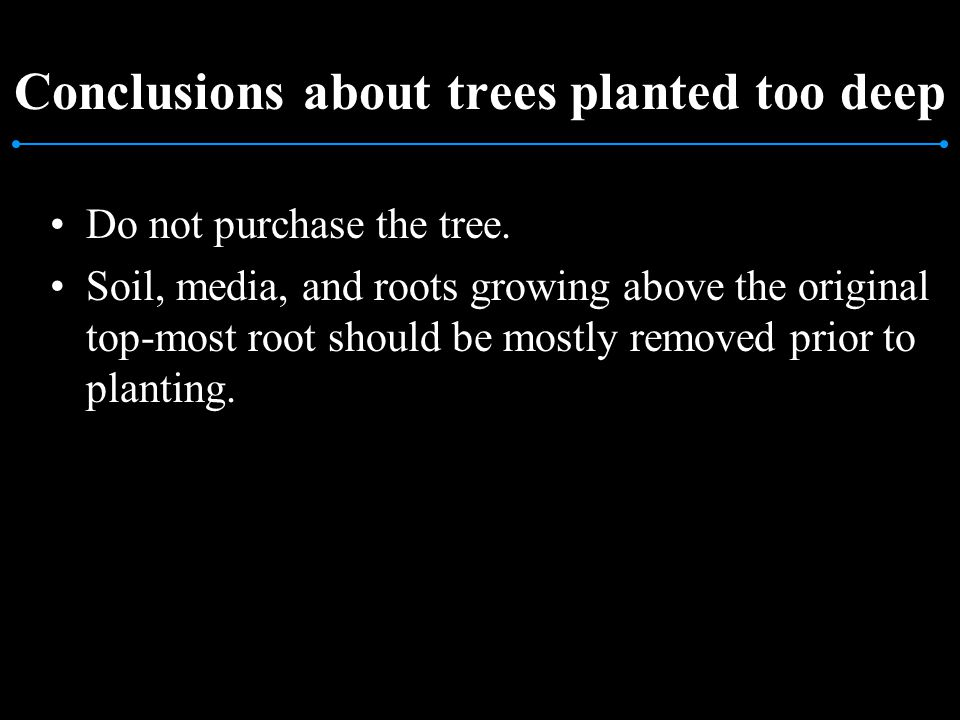 Conclusions about trees planted too deep Do not purchase the tree. Soil, media, and roots growing above the original top-most root should be mostly re