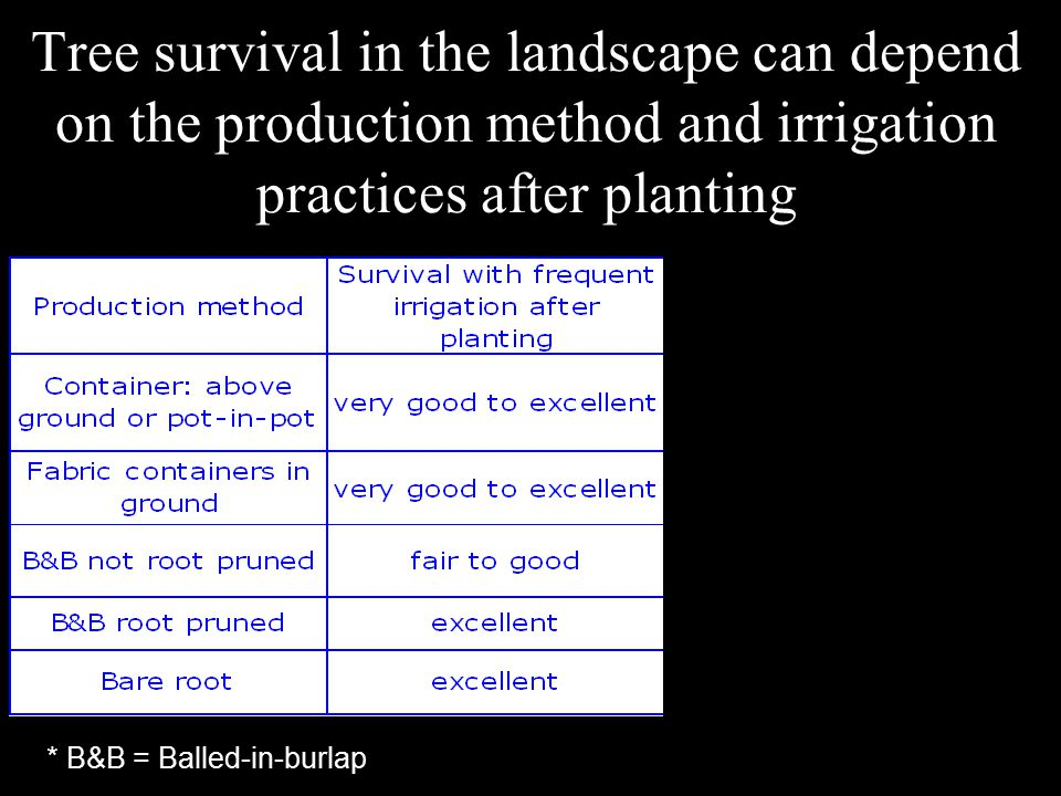 Conclusions about trees planted too deep Do not purchase the tree.