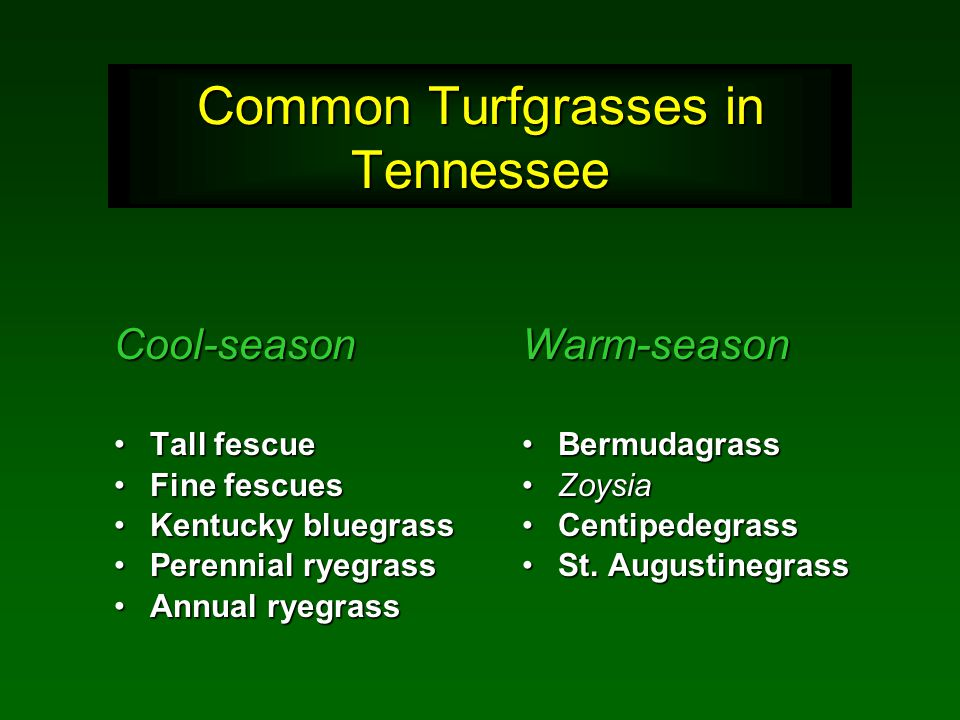 Common Turfgrasses in Tennessee Warm-season BermudagrassBermudagrass ZoysiaZoysia CentipedegrassCentipedegrass St.