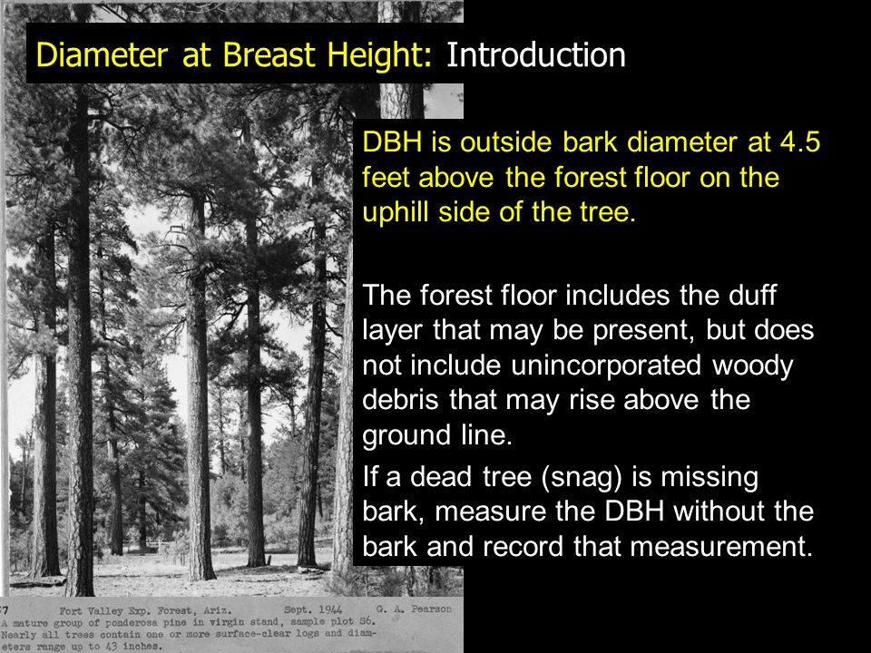 Bark: Measurement Using Bark Gauges: Minimize any twisting of the gauge and the chisel tip is easily (and often!) broken For trees with rough bark – measure thickness on ridges Repeat several times around stem to get average measurement If measuring DBH, use gauge at same height