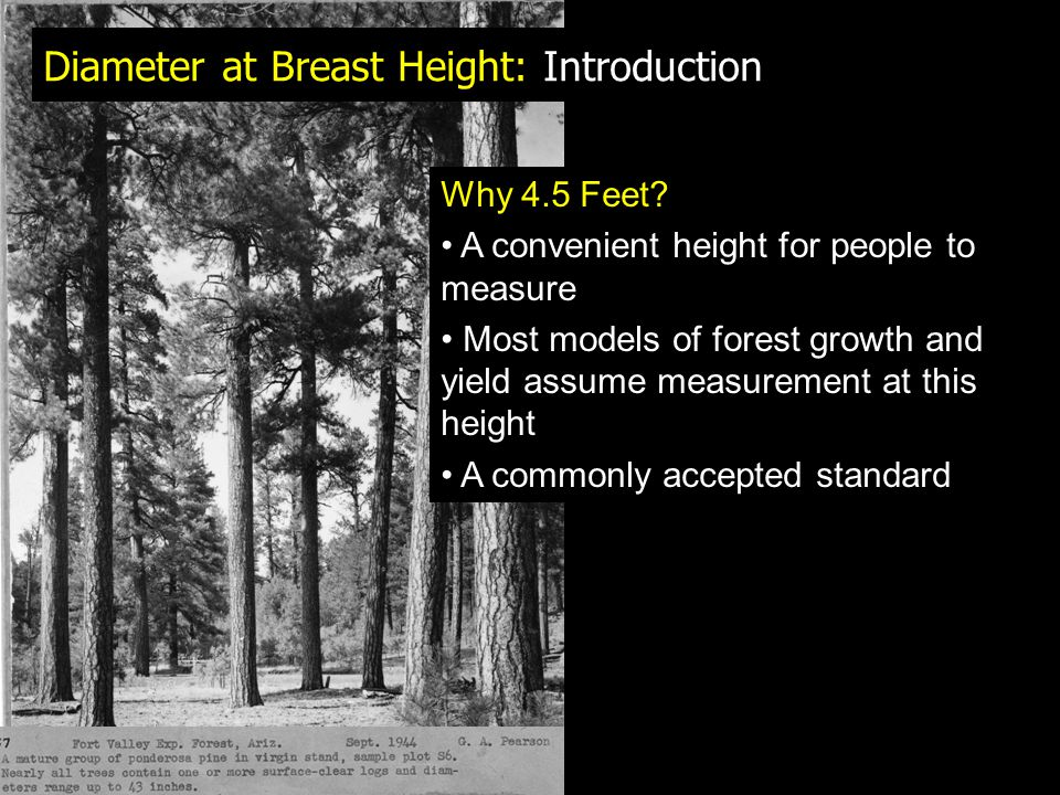 This measure of DBH depends on: 1.Is the junction above 4.5 feet.