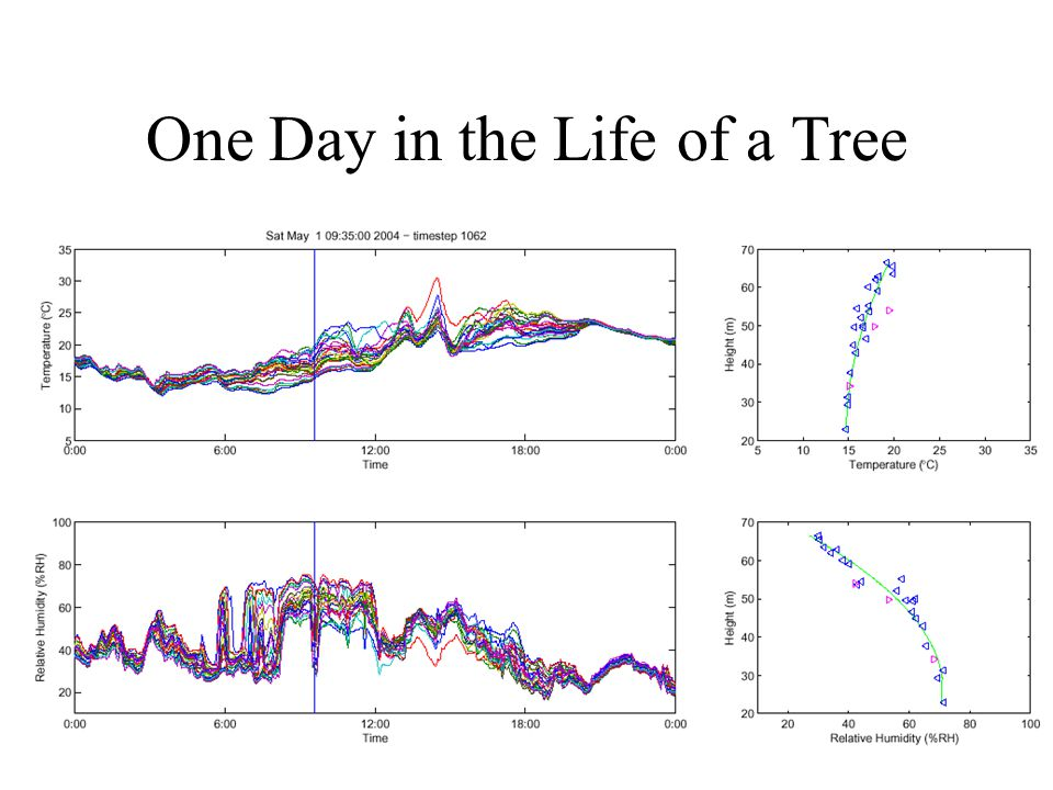 One Day in the Life of a Tree