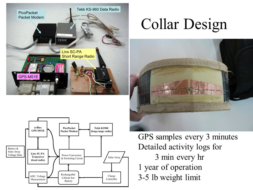 Collar Design GPS samples every 3 minutes Detailed activity logs for 3 min every hr 1 year of operation 3-5 lb weight limit