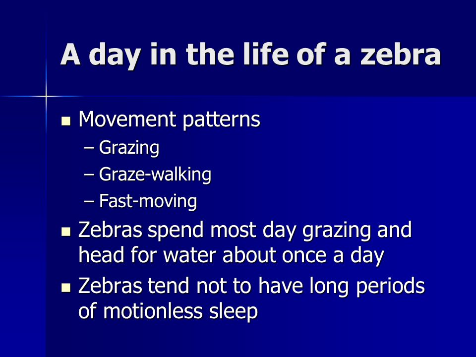 A day in the life of a zebra Movement patterns Movement patterns –Grazing –Graze-walking –Fast-moving Zebras spend most day grazing and head for water