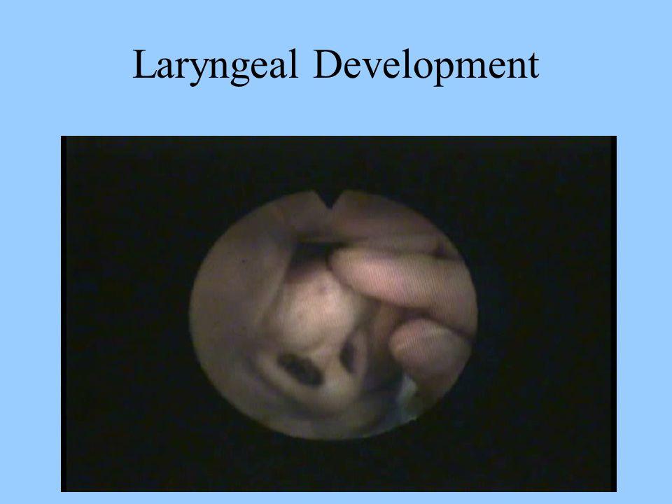 Laryngeal Development