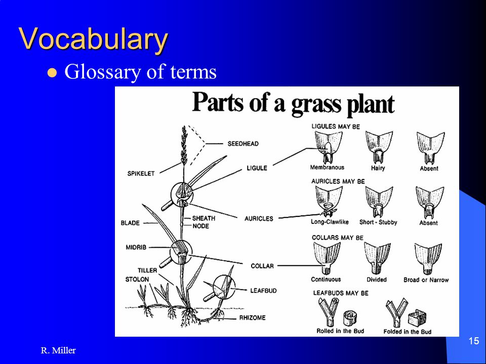 R. Miller 15 Vocabulary Glossary of terms