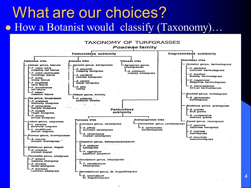 R. Miller 4 What are our choices How a Botanist would classify (Taxonomy)…