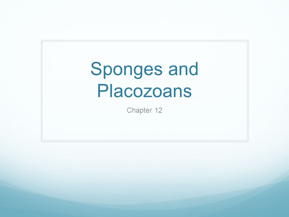 Phylogeny and Adaptive Diversification Sponges appeared before the Cambrian.