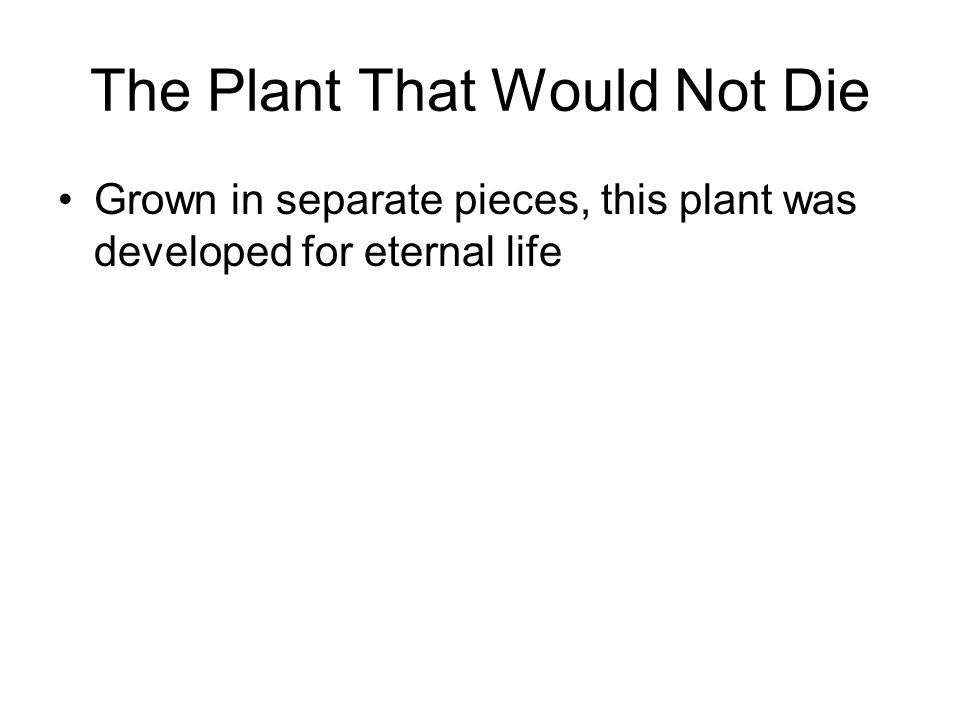 The Plant That Would Not Die Grown in separate pieces, this plant was developed for eternal life