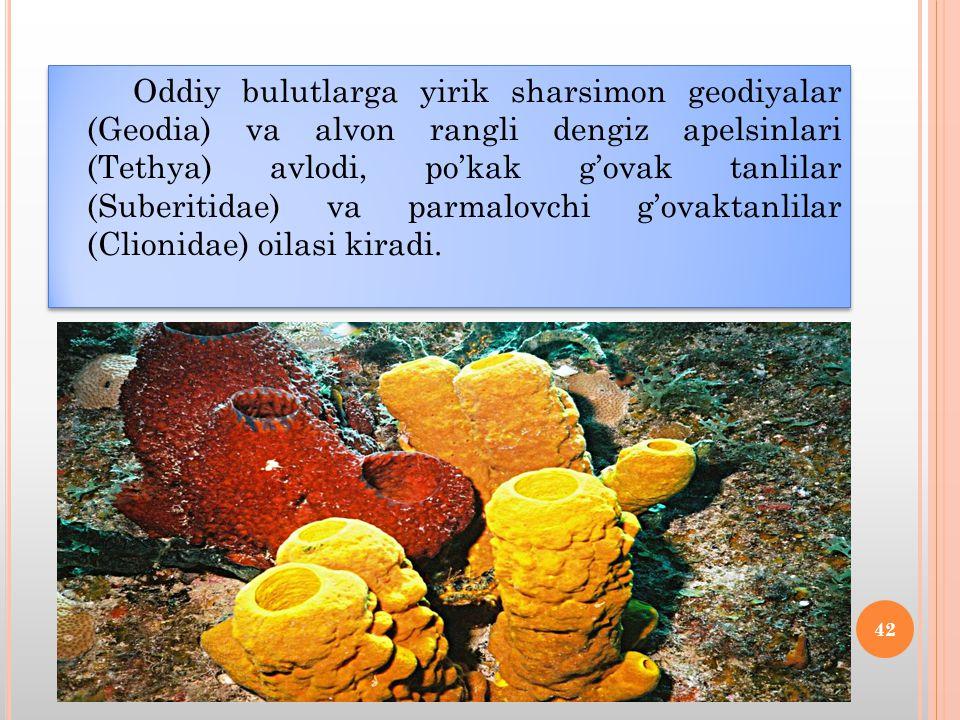 Oddiy bulutlarga yirik sharsimon geodiyalar (Geodia) va alvon rangli dengiz apelsinlari (Tethya) avlodi, po'kak g'ovak tanlilar (Suberitidae) va parmalovchi g'ovaktanlilar (Clionidae) oilasi kiradi.