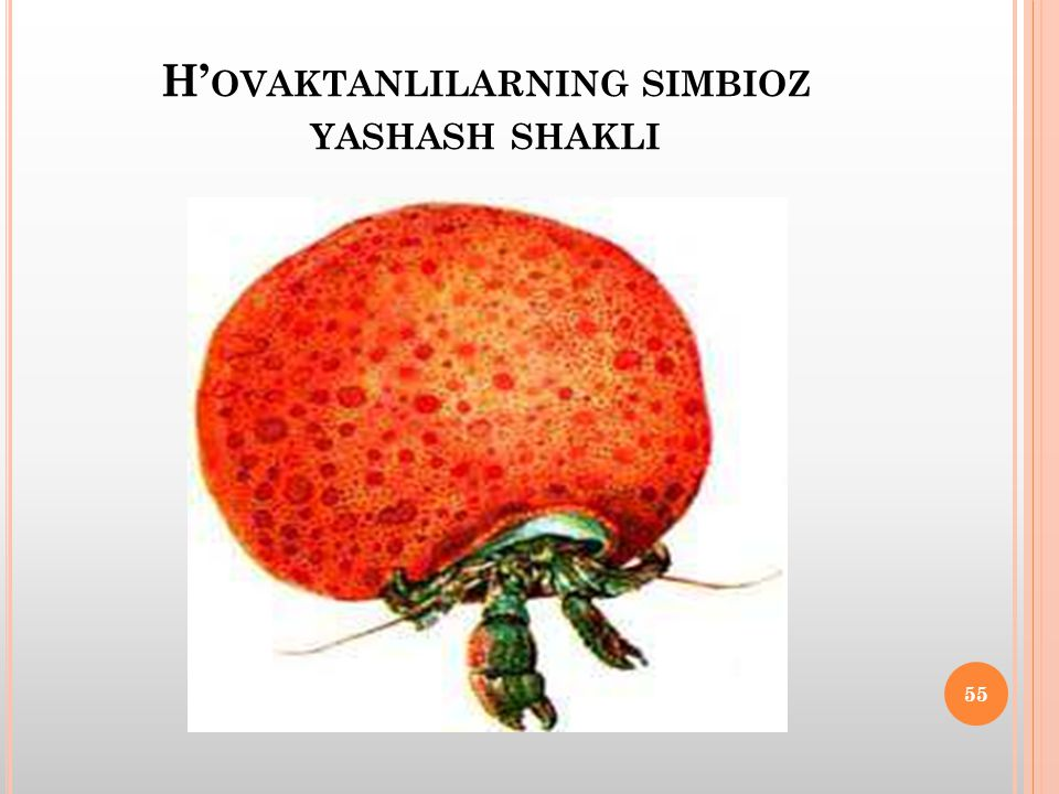 H' OVAKTANLILARNING SIMBIOZ YASHASH SHAKLI 55