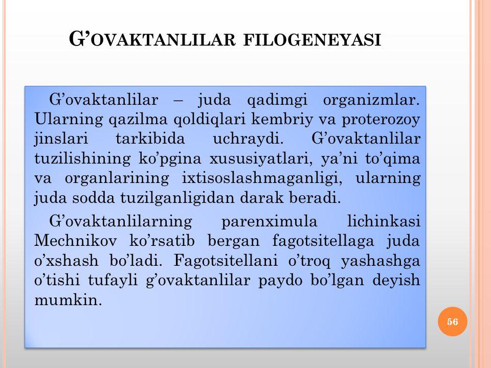 G' OVAKTANLILAR FILOGENEYASI G'ovaktanlilar – juda qadimgi organizmlar.