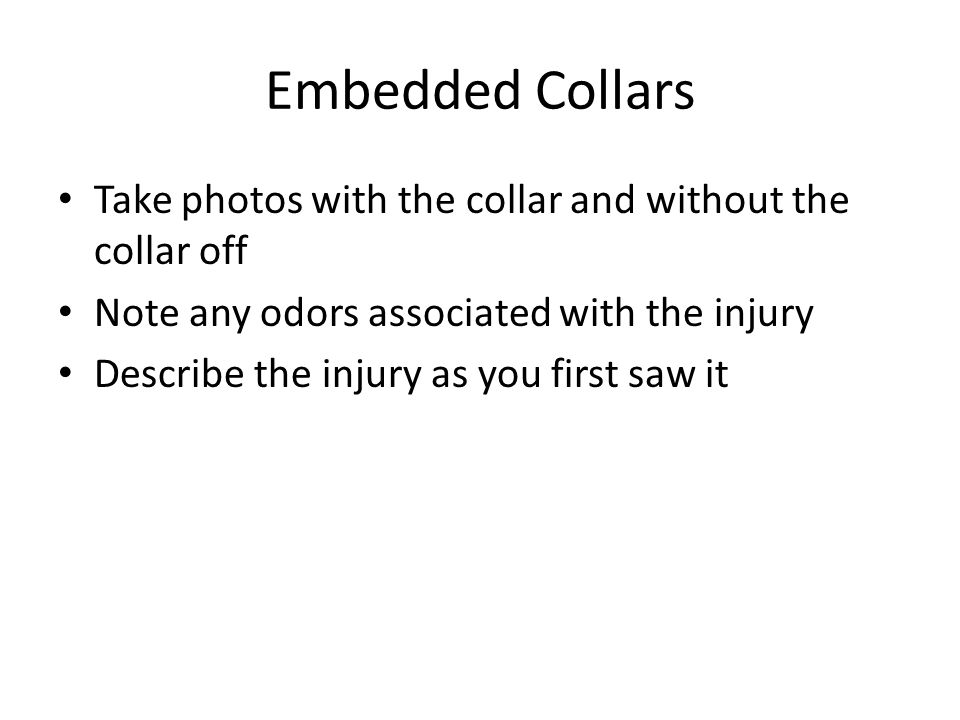 Embedded Collars Take photos with the collar and without the collar off Note any odors associated with the injury Describe the injury as you first saw it