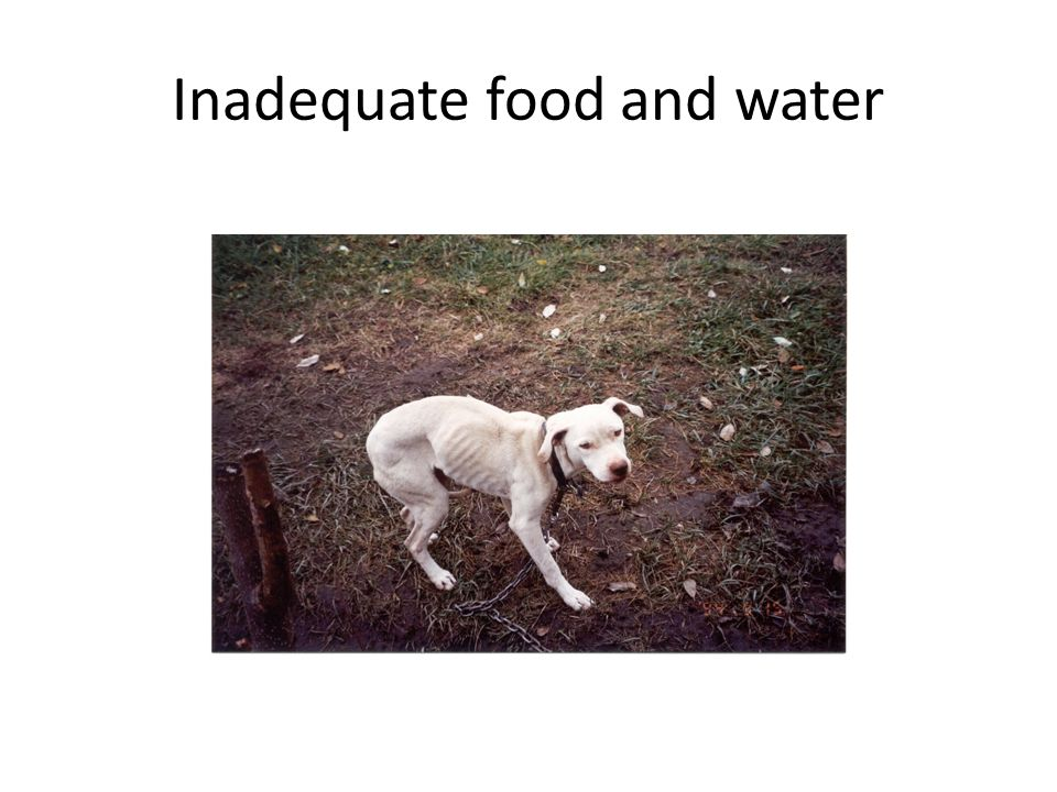 Inadequate food and water