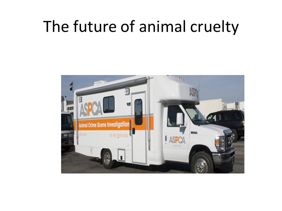 The future of animal cruelty