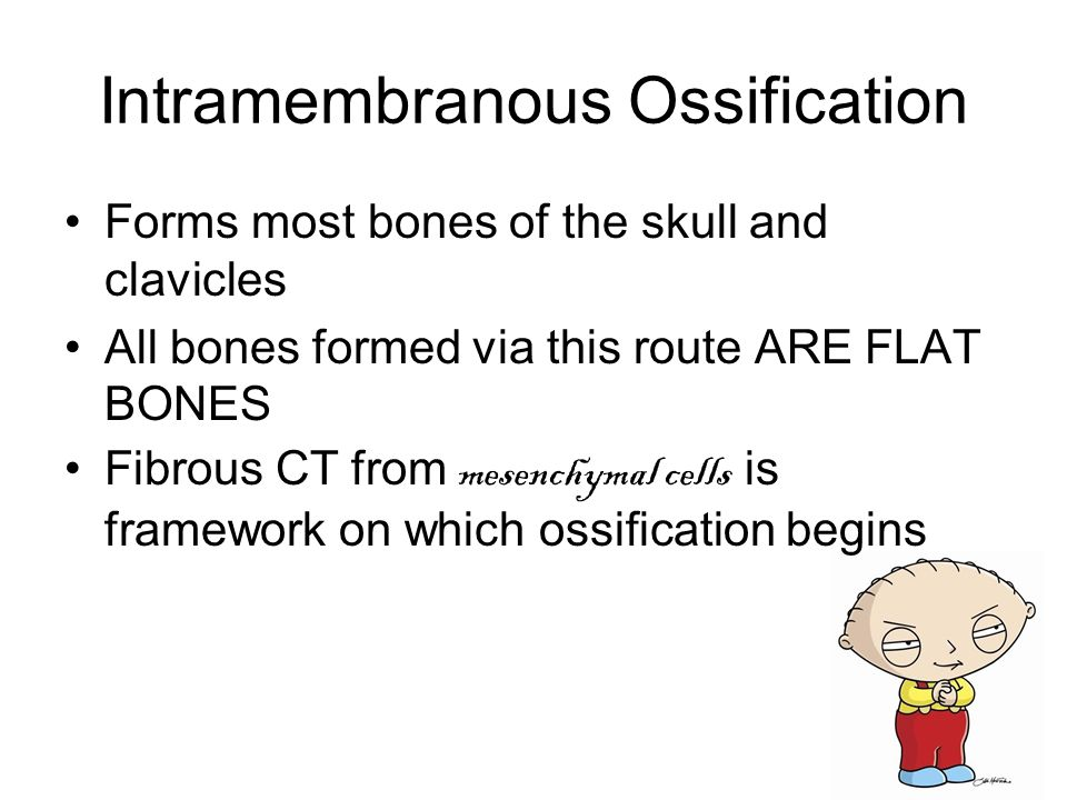 Intramembranous Ossification Forms most bones of the skull and clavicles All bones formed via this route ARE FLAT BONES Fibrous CT from mesenchymal cells is framework on which ossification begins