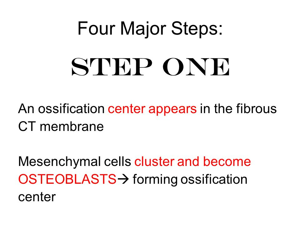 Four Major Steps: STEP ONE An ossification center appears in the fibrous CT membrane Mesenchymal cells cluster and become OSTEOBLASTS  forming ossification center