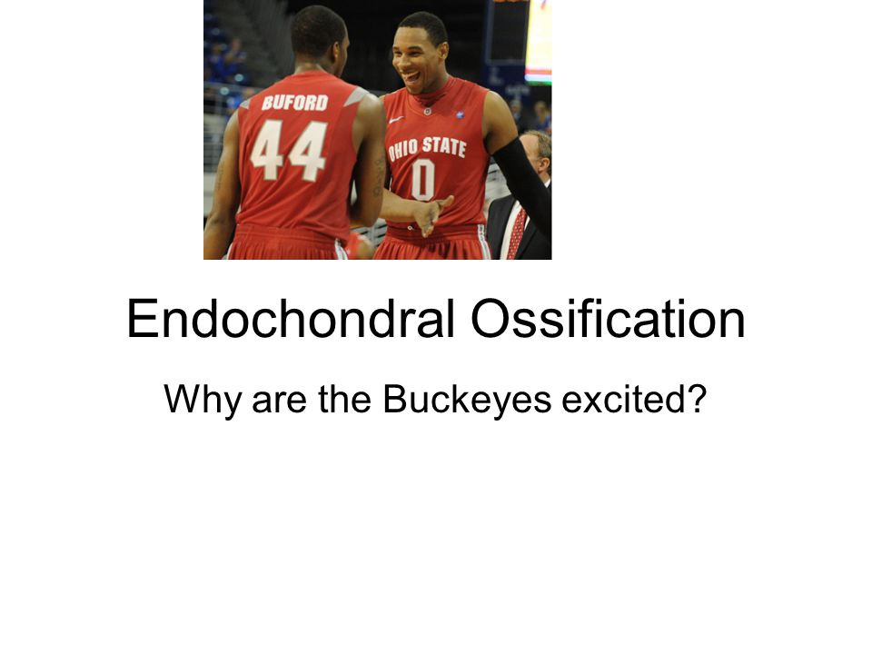 Endochondral Ossification Why are the Buckeyes excited