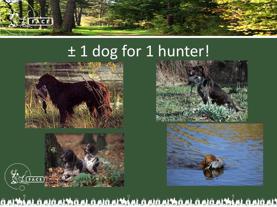 ± 1 dog for 1 hunter!
