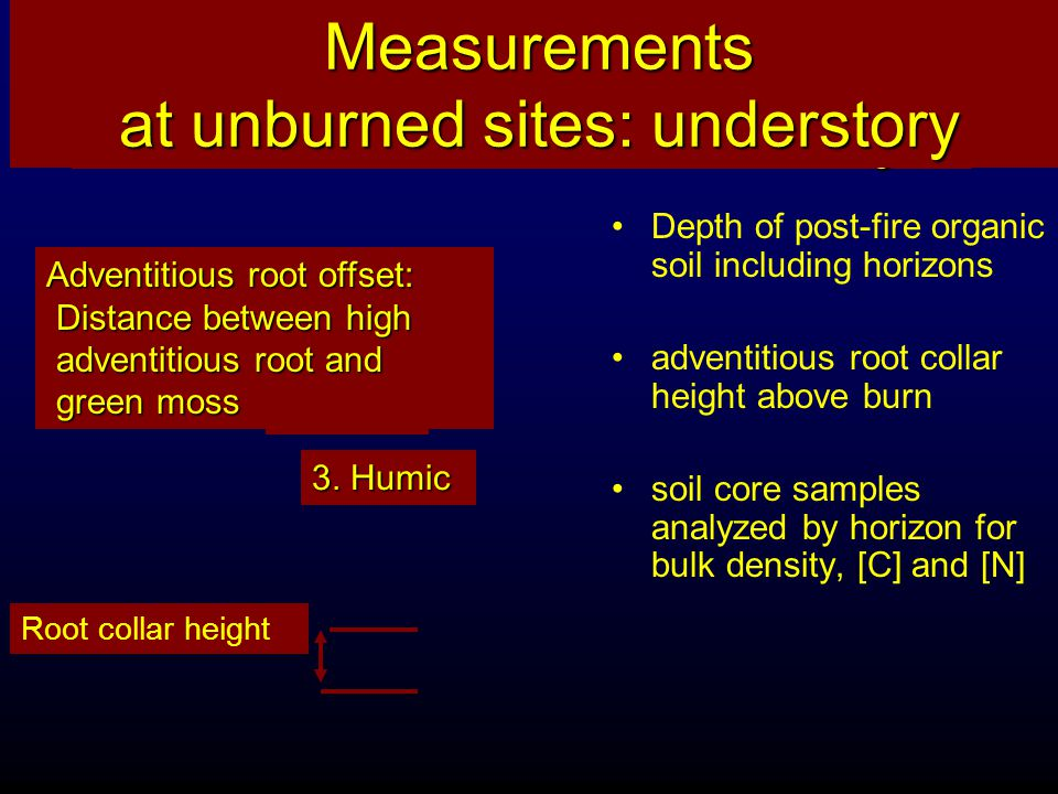Using the adventitious root method to measure fire severity How do we measure something that burned away