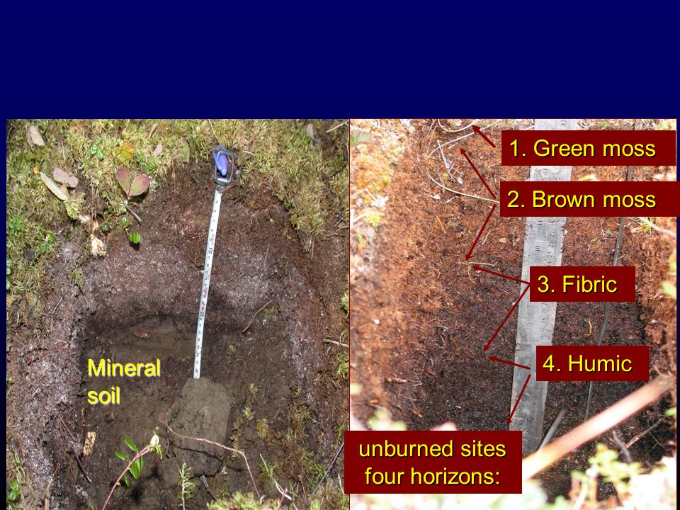 Measurements at burned sites: understory Depth of post-fire organic soil including horizons adventitious root collar height above burn soil core samples analyzed by horizon for bulk density, [C] and [N] 1.