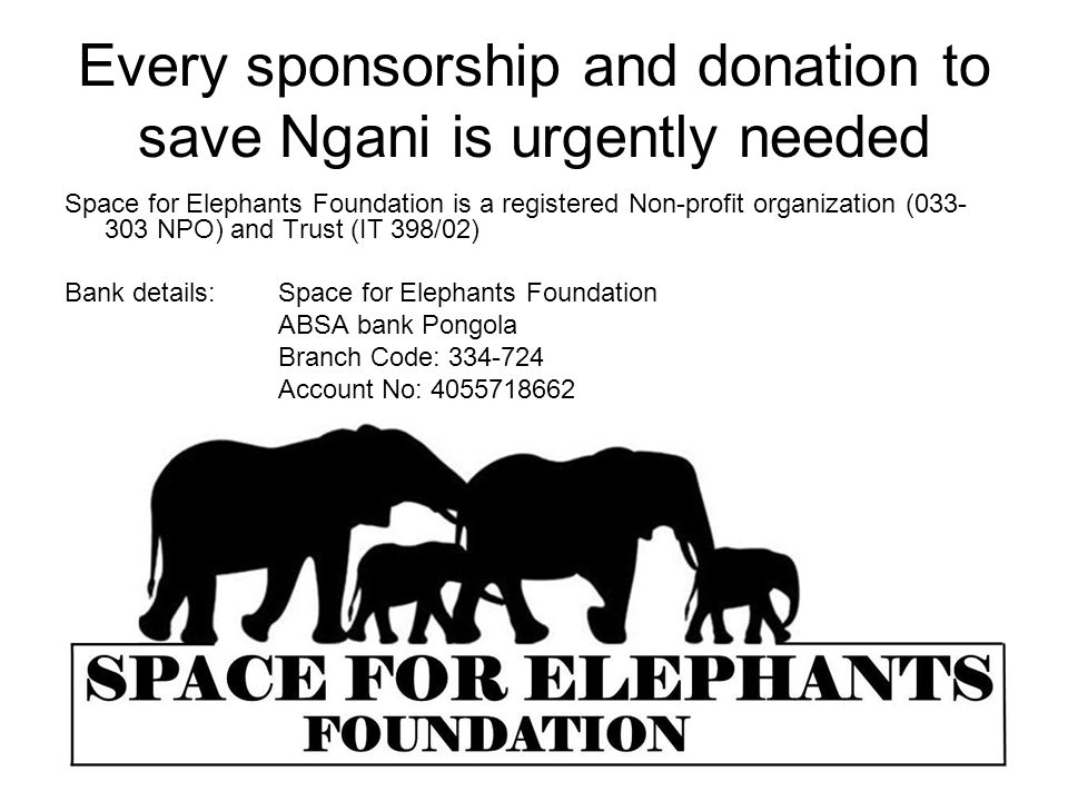 Every sponsorship and donation to save Ngani is urgently needed Space for Elephants Foundation is a registered Non-profit organization (033- 303 NPO) and Trust (IT 398/02) Bank details:Space for Elephants Foundation ABSA bank Pongola Branch Code: 334-724 Account No: 4055718662