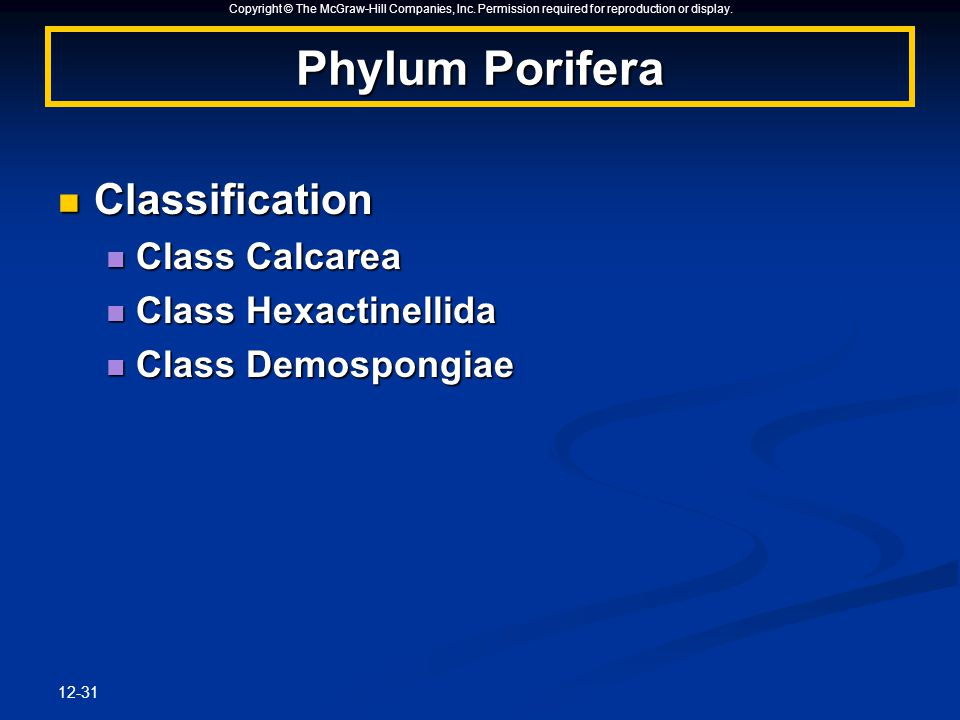 Copyright © The McGraw-Hill Companies, Inc. Permission required for reproduction or display. 12-31 Phylum Porifera Classification Classification Class