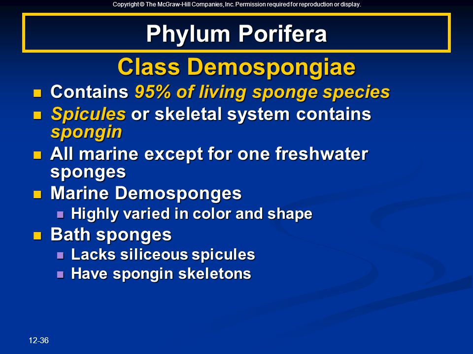 Copyright © The McGraw-Hill Companies, Inc. Permission required for reproduction or display. 12-36 Phylum Porifera Class Demospongiae Contains 95% of