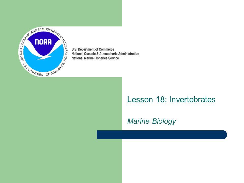 Lesson 18: Invertebrates Marine Biology