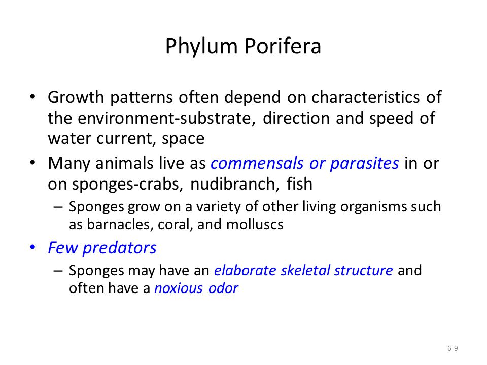 Phylum Porifera Growth patterns often depend on characteristics of the environment-substrate, direction and speed of water current, space Many animals