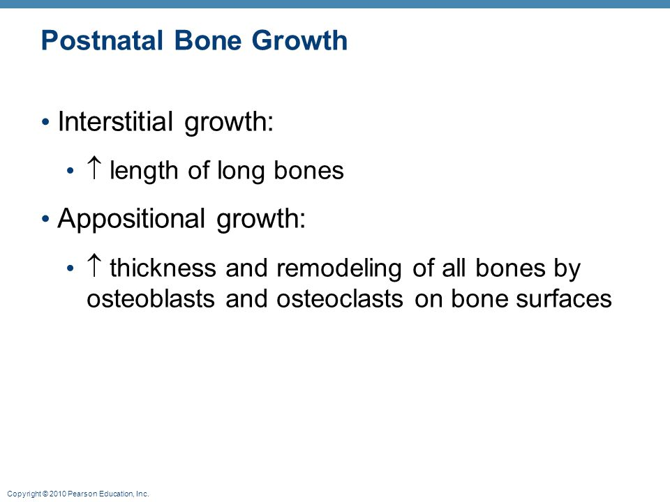 Copyright © 2010 Pearson Education, Inc. Postnatal Bone Growth Interstitial growth:  length of long bones Appositional growth:  thickness and remode