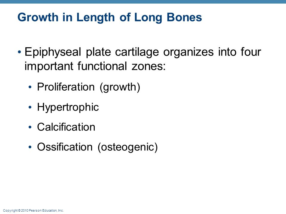 Copyright © 2010 Pearson Education, Inc. Growth in Length of Long Bones Epiphyseal plate cartilage organizes into four important functional zones: Pro