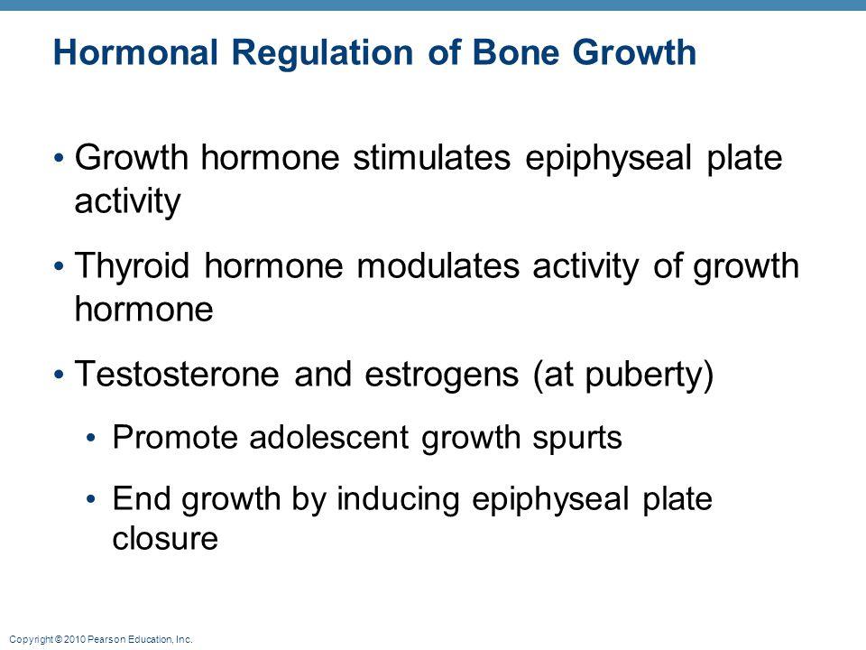 Copyright © 2010 Pearson Education, Inc. Hormonal Regulation of Bone Growth Growth hormone stimulates epiphyseal plate activity Thyroid hormone modula