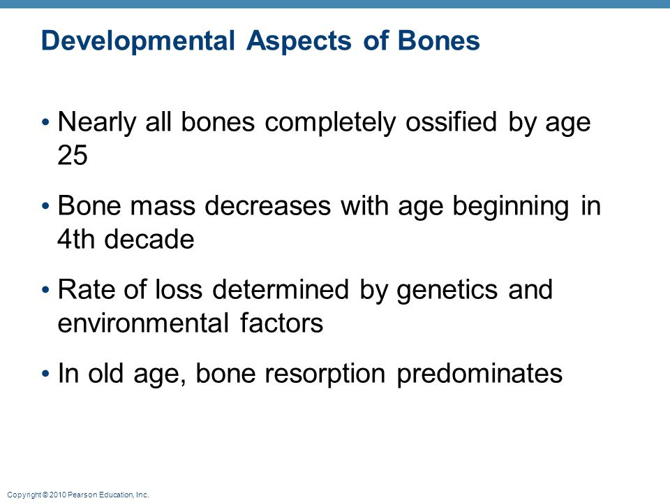 Copyright © 2010 Pearson Education, Inc. Developmental Aspects of Bones Nearly all bones completely ossified by age 25 Bone mass decreases with age be