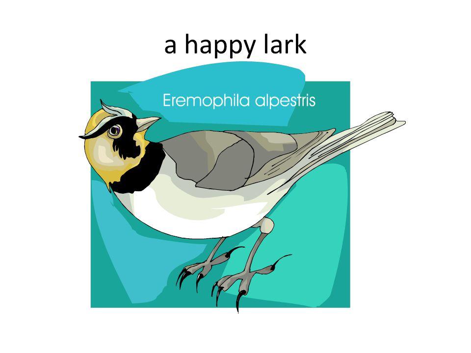 a happy lark