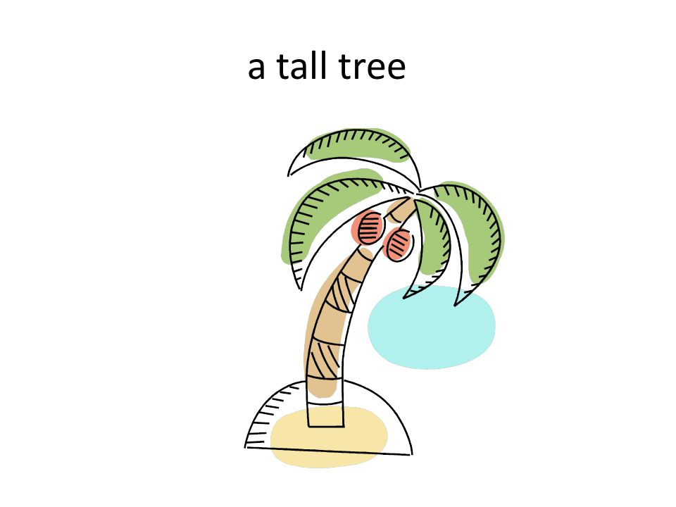 a tall tree