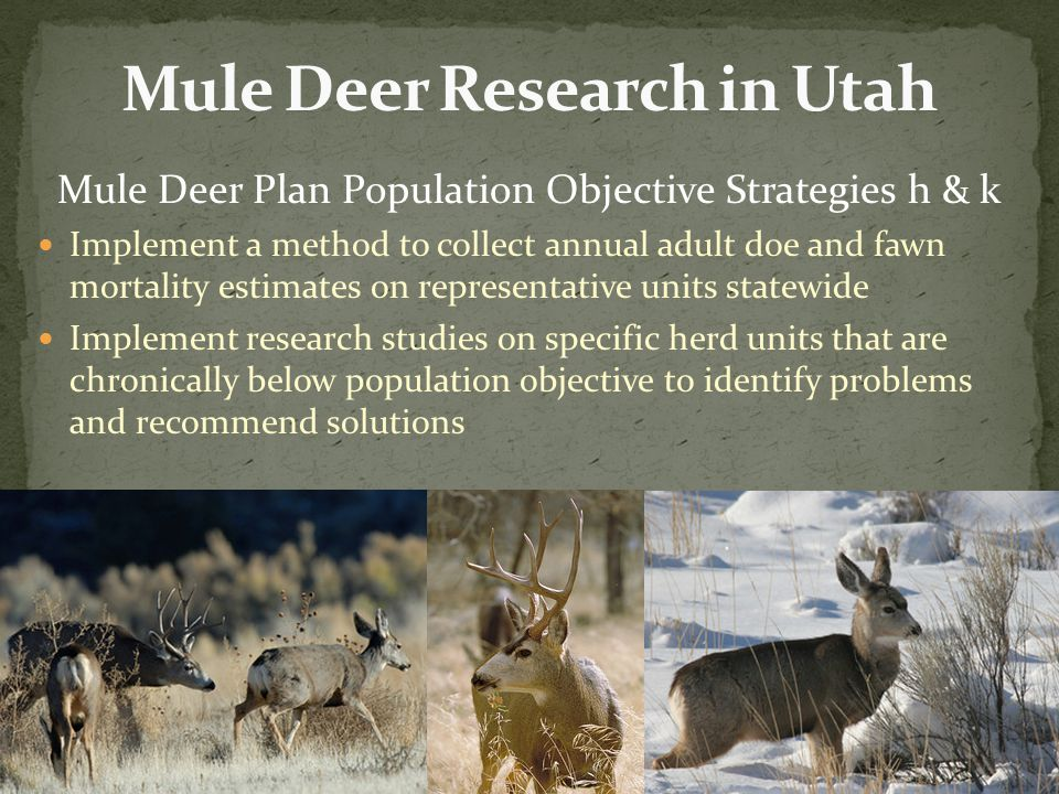 Mule Deer Plan Population Objective Strategies h & k Implement a method to collect annual adult doe and fawn mortality estimates on representative uni