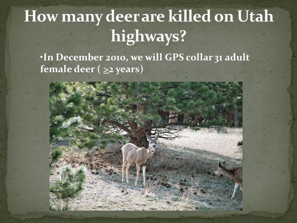 In December 2010, we will GPS collar 31 adult female deer ( >2 years)